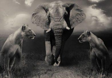 Animales Africanos Peligrosos
