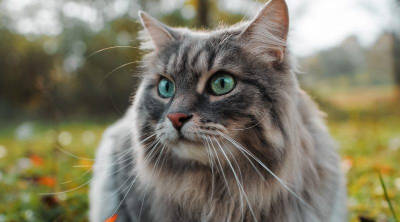 ¡Los 10 gatos más viejos de todos los tiempos!