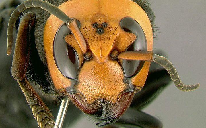 ¿Son los insectos animales?  |  Animales AZ