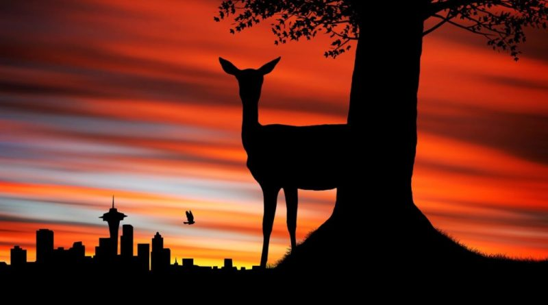10 mejores puestas de sol en Johannesburgo (2/2)
