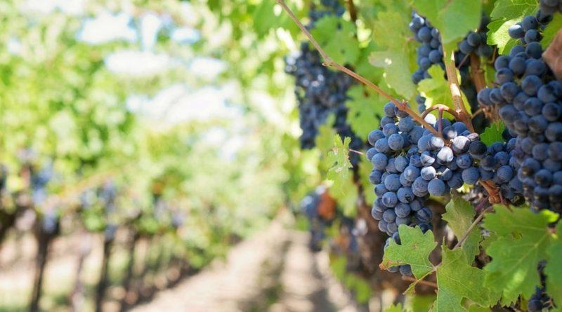 Los 20 mejores vinos sudafricanos en el escenario mundial (parte 2)