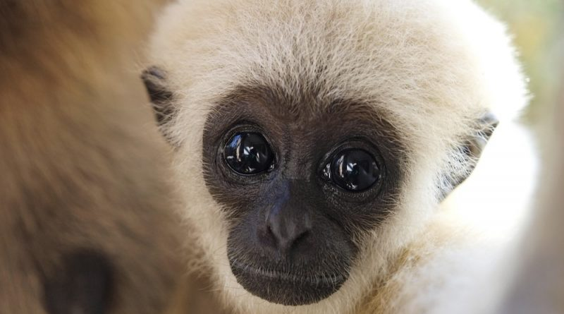 24 lindos animales bebés que derretirán tu corazón
