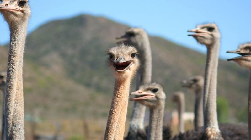 4 cosas para hacer en Oudtshoorn sin un avestruz