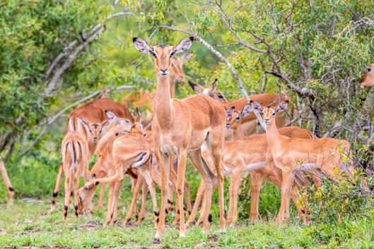 Actividades y consejos en el parque Kruger