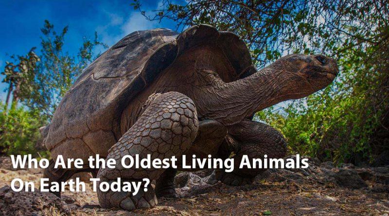 Animales vivos más viejos |  Los animales más antiguos de la tierra