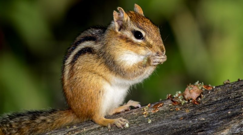 Atrapando ardillas |  Animales AZ