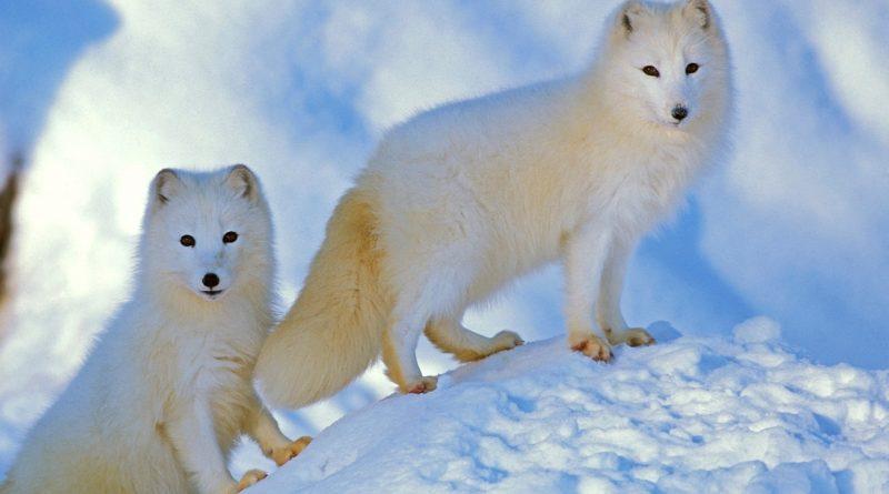 Básicamente invencible: los 10 animales más duros del mundo