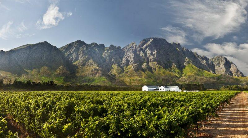 Cape Wines - ¡Saludable!  Tour de Cape Winelands