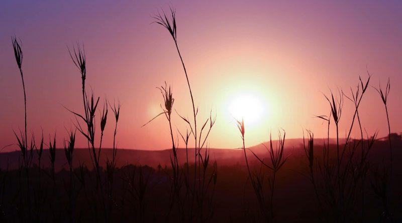 Gauteng: los mejores parajes naturales