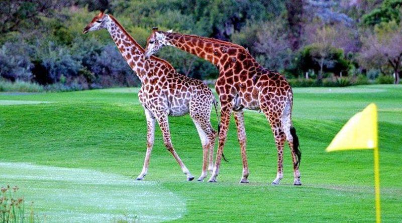 Golf en Sudáfrica