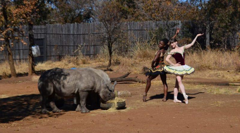 Insólito, educativo y hermoso: un ballet presentado frente a rinocerontes