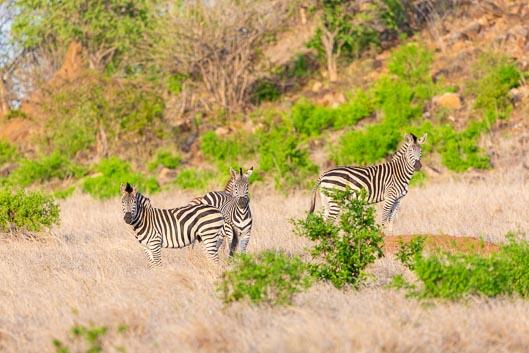 Itinerario por Zimbabwe # 4: de Gonarezhou a Mapungubwe