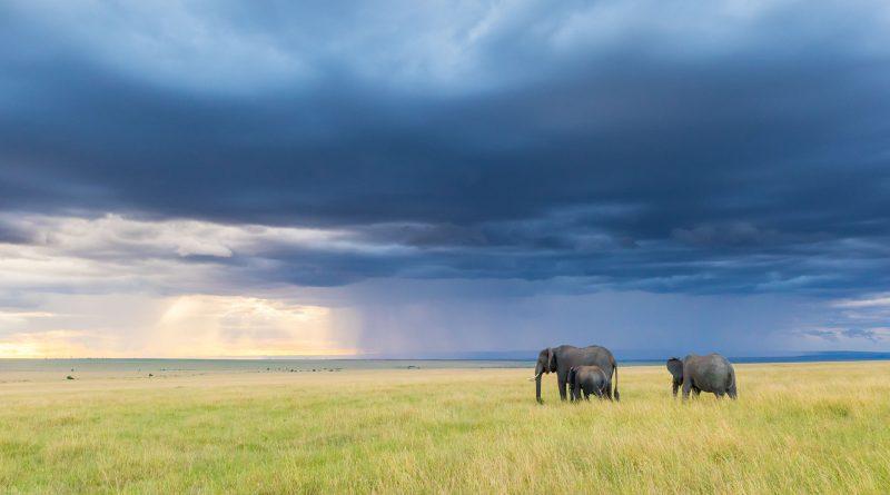 Itinerario y presupuesto para un safari en Kenia