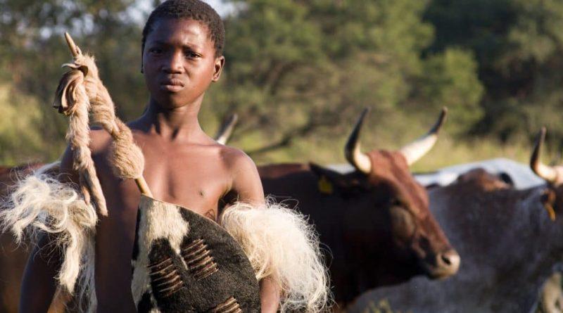 La cultura zulú y el simbolismo del ganado