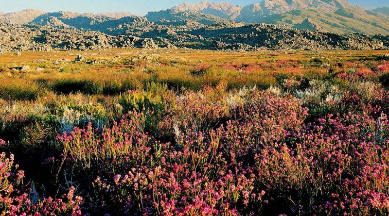 La región floral de Ciudad del Cabo