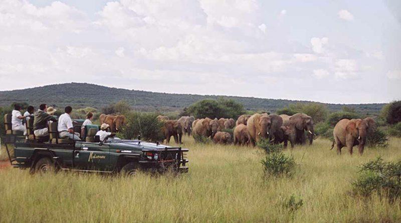 La reserva Madikwe |  Descubrimiento de Sudáfrica