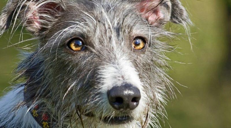 Las 10 mejores razas de perros: clasificadas |  Hechos increíbles, Imágenes