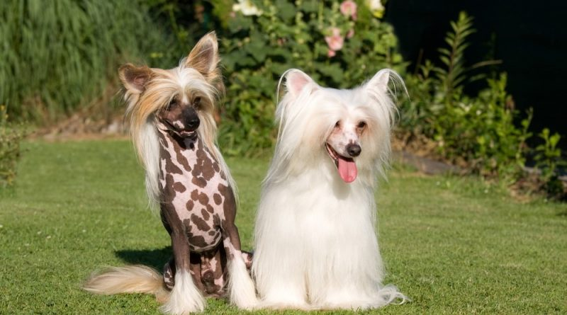 Las 10 mejores razas de perros familiares: buenas con los niños