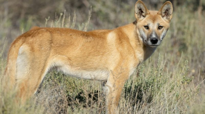 Las 10 mejores razas de perros salvajes del mundo