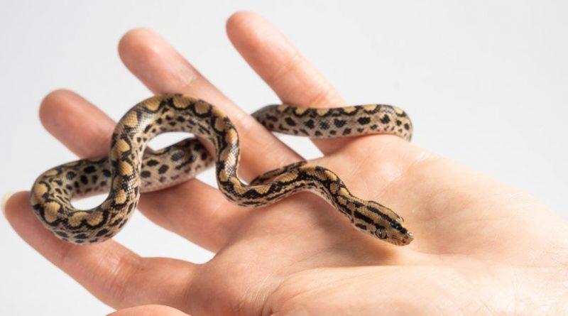 Las 10 serpientes más pequeñas del mundo
