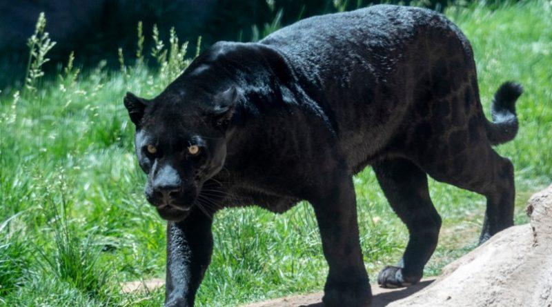 Los 10 animales más asombrosos de la selva tropical