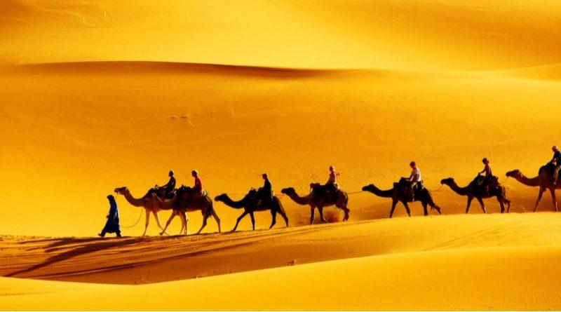 Los 10 animales más asombrosos del desierto