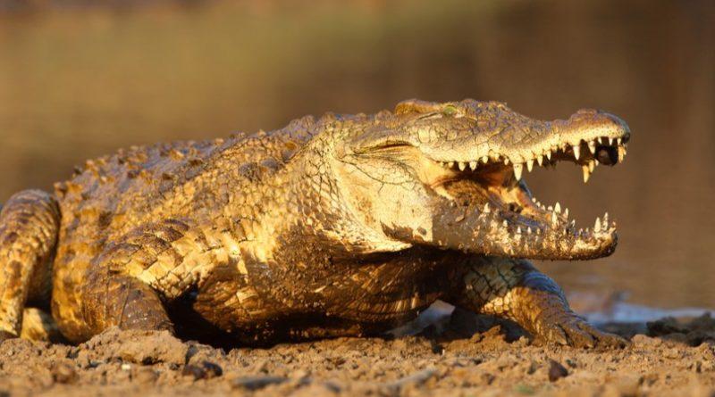 Los 10 animales más aterradores del mundo