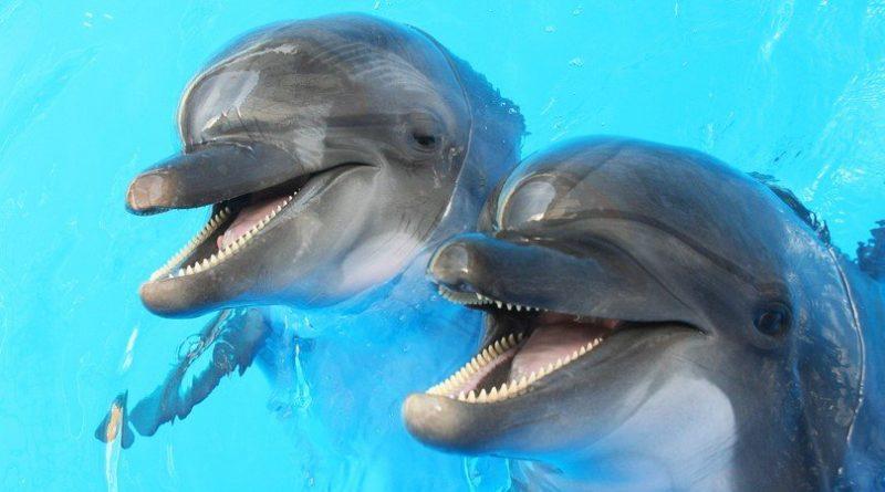 Los 10 animales más felices de la Tierra
