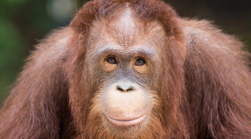Los 10 animales más inteligentes del mundo