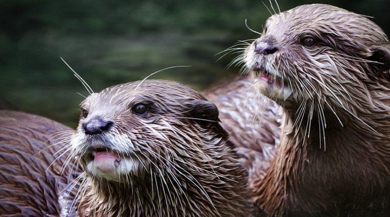Los 10 animales más lindos de la tierra