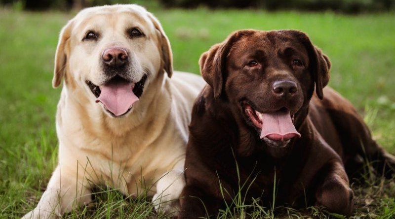Los 10 mejores nombres de perros del mundo