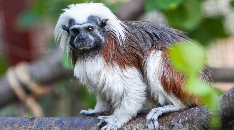 Los 10 monos más pequeños del mundo