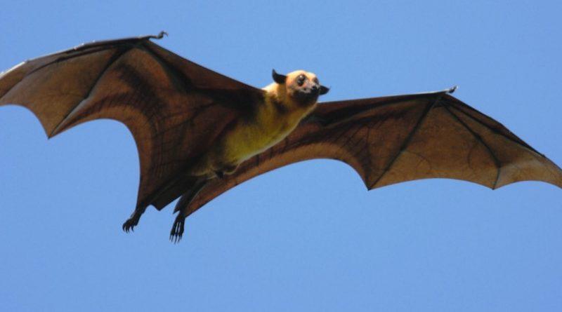 Los 10 murciélagos más grandes del mundo