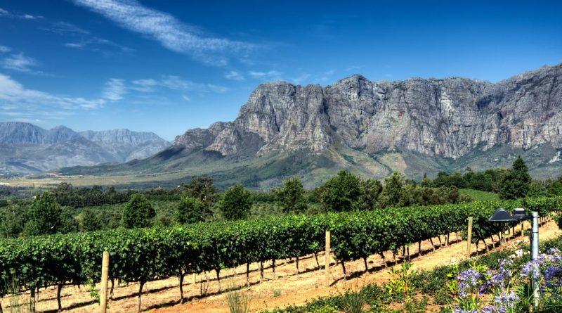 Los 20 mejores vinos sudafricanos en el escenario mundial (parte 3)
