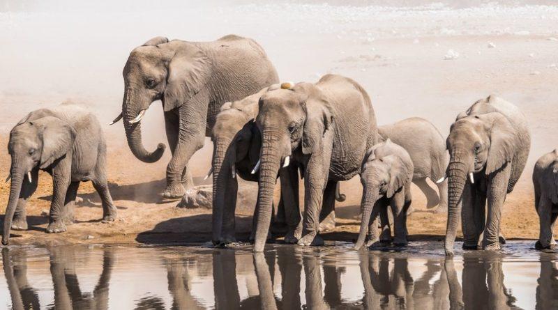 Los 8 animales más altos del mundo