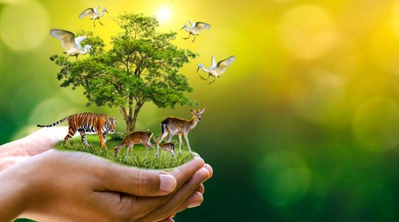 Los 9 conservacionistas más famosos del mundo