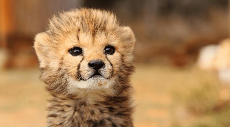 Los animales bebés más lindos de Sudáfrica
