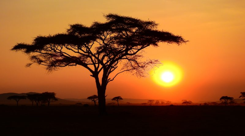 The sun setting in the Serengeti with a large tree in the foreground and several trees in the background.