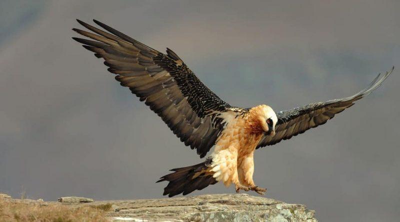 Los pájaros de KwaZulu-Natal    Descubrimiento de Sudáfrica