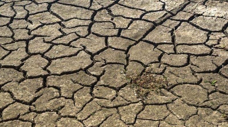 Níger al borde de la hambruna