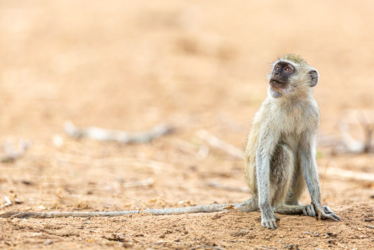 Organización y presupuesto de un safari en Zimbabwe