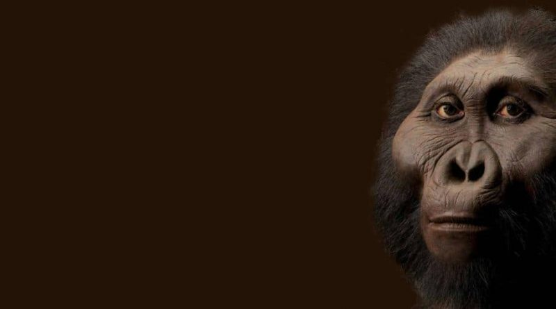 Paranthropus robustus: cráneo de primo humano de 2 millones de años