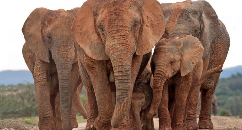 Parque Nacional Addo Elephant    Descubrimiento de Sudáfrica