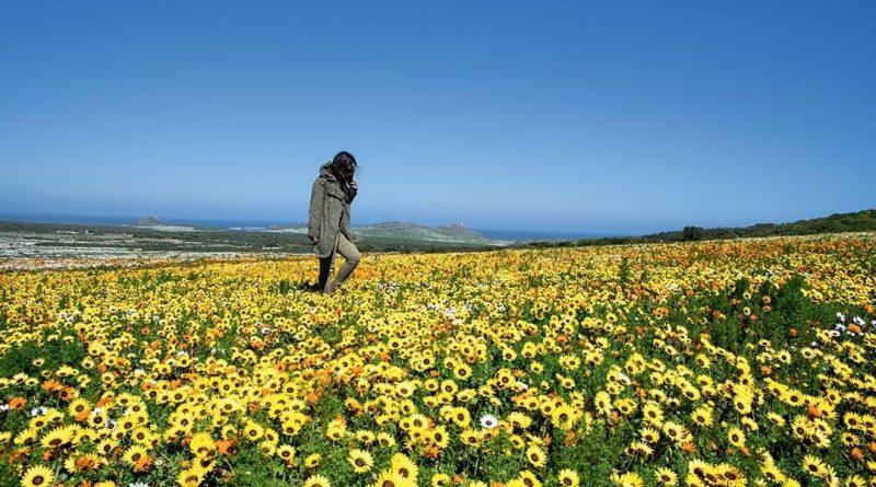 Parque Nacional Namaqua: nada en un mar de flores