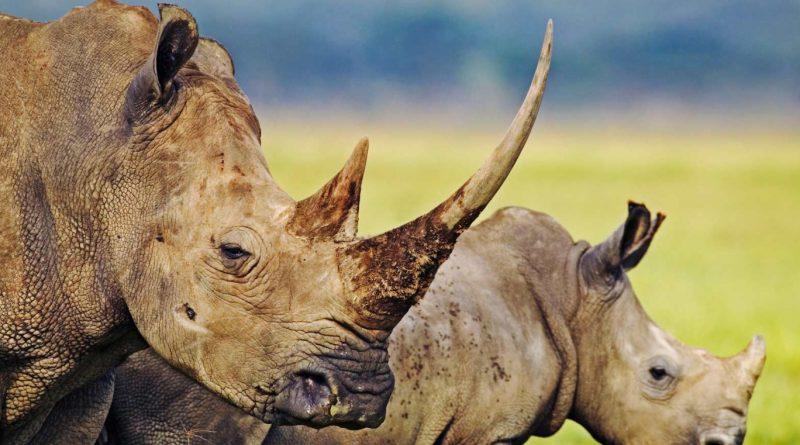 Reserva Hluhluwe-Umfolozi    Descubrimiento de Sudáfrica