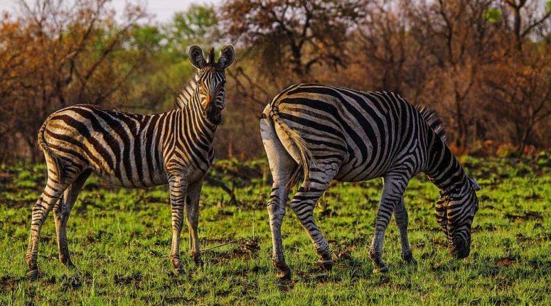Reserva natural de Roodeplaat - África en un día