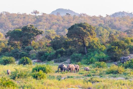 Safari Kruger en 2020: organización y presupuesto