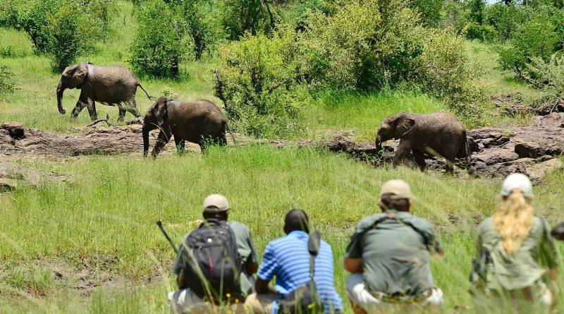 Safari a pie |  Descubrimiento de Sudáfrica