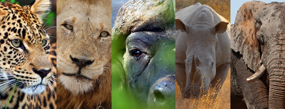 The Big Five reúne a 5 de los mamíferos más grandes de Sudáfrica