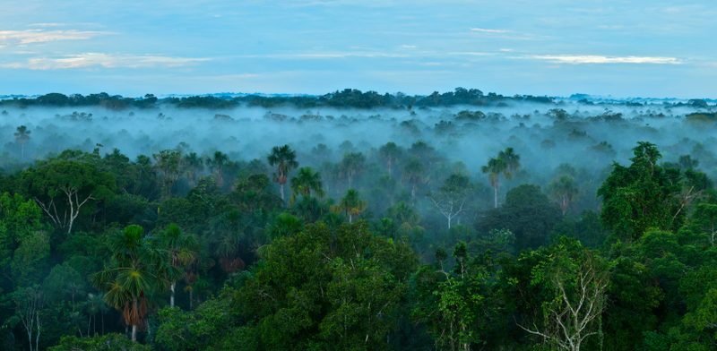 A photo of the Amazon forest, taken from above the tree line. Fog has settled just below the tree line, and there are clouds in a blue sky.